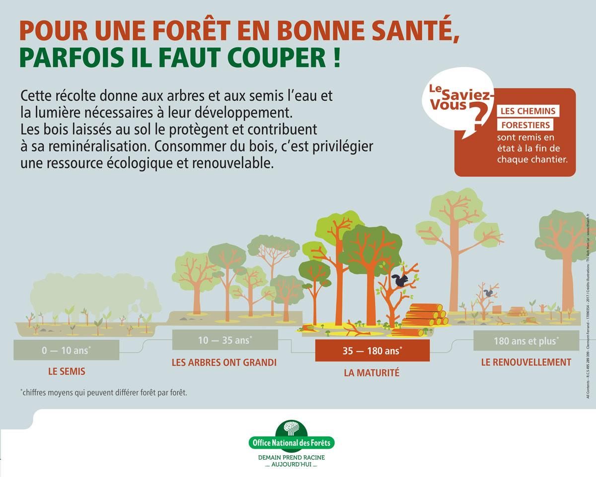 La forêt séméacaise  - Séméac - hautes-Pyrénées